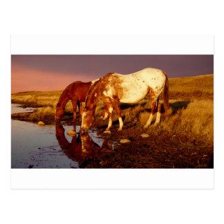 Am Bewässerungsloch Postkarte