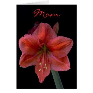 Amaryllis am schwarzen Tag der Mutter Karte