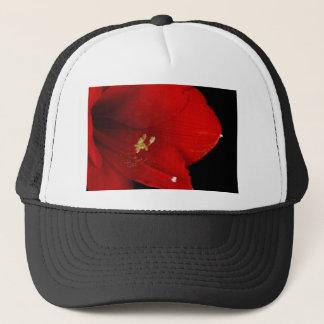 Amaryllis-Blume nahes oben 12-27-10 Truckerkappe
