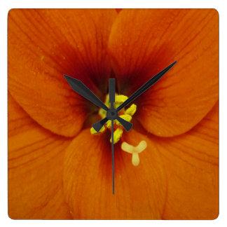 Amaryllis-Blumen-Orange Quadratische Wanduhr