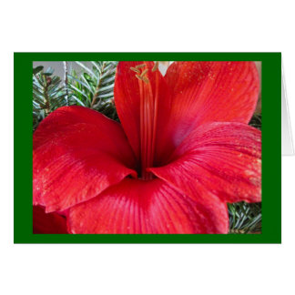Amaryllis-Blüte Karte