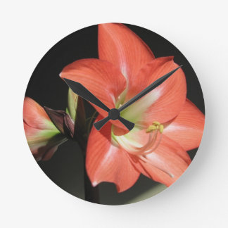 Amaryllis Hippeastrum Blumen abgeschieden auf Runde Wanduhr