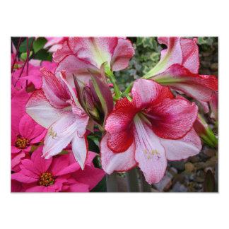 Amaryllis-und Poinsettia-Feiertags-Foto-Druck Photo Drucke