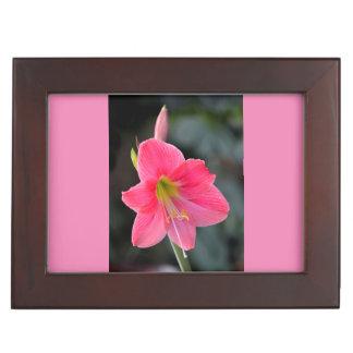 Amaryllisblüte in pink,Nahaufnahme, Erinnerungsdose