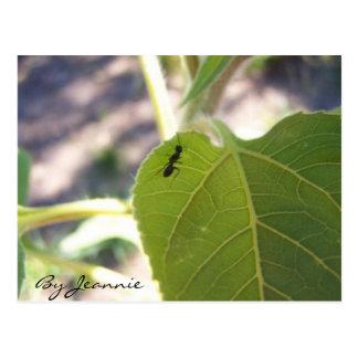 Ameise auf Blatt Postkarte