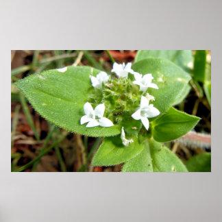 Ameise unter weißen Blumen Poster