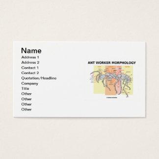 Ameisen-Arbeitskraft-Morphologie (anatomisches Visitenkarte
