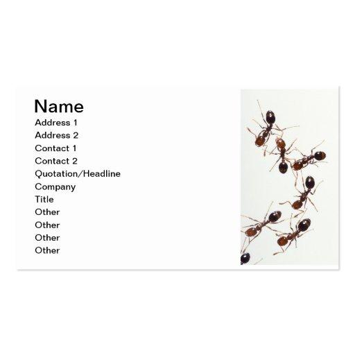Ameisen Visitenkartenvorlagen