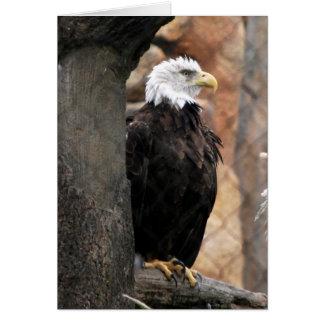 amerian Adler Karten