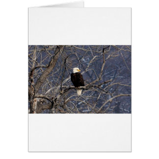 Amerikaner Eagle Grußkarte
