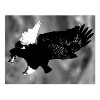 Amerikaner Eagle Postkarten