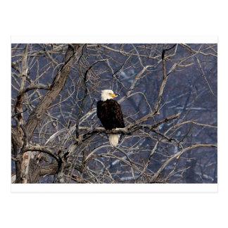 Amerikaner Eagle Postkarte