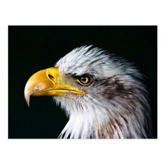 Amerikaner-Eagle-Postkarte Postkarten