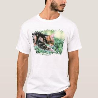 Amerikaner Shorthair 7 T-Shirt
