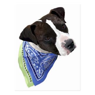 Amerikaner Staffordshire Terrier-Aggie Postkarte