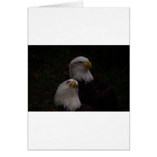 amerikanische Adler 2 Grußkarte