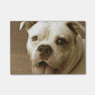 Amerikanische Bulldogge Post-it Klebezettel