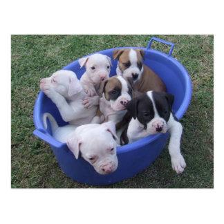 Amerikanische Bulldoggen-Welpen-Postkarte Postkarten