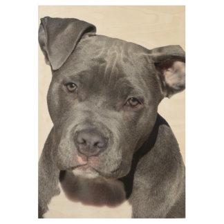 Amerikanische Pitbull Terrier Holzposter