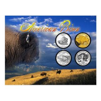 Amerikanischer Bison auf Münzen Postkarte