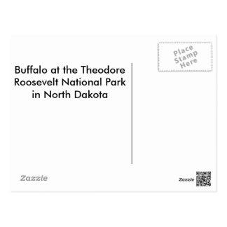 Amerikanischer Bison (Büffel) Postkarte