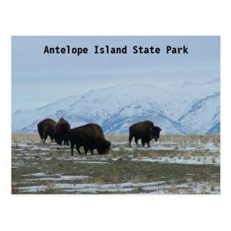 Amerikanischer Bison Postkarte