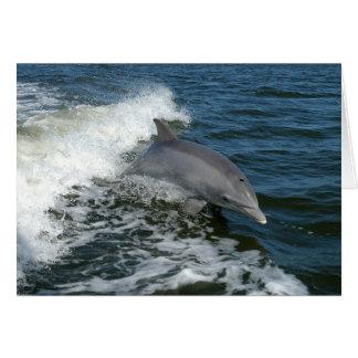 Amerikanischer Bottlenose-Delphin Karte