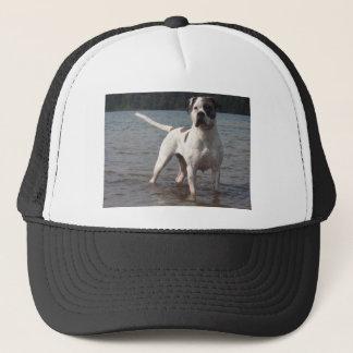 Amerikanischer Bulldoggen-Hund im Wasser Truckerkappe