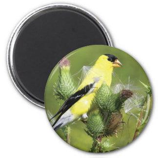 Amerikanischer Goldfinch-Fotografie-Magnet Runder Magnet 5,7 Cm