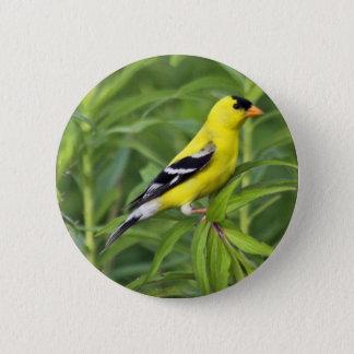 Amerikanischer Goldfinch-Knopf Runder Button 5,1 Cm