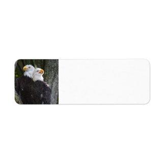 Amerikanischer kahler Rückversand-Adressaufkleber