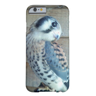 Amerikanischer Kestrel-Telefon-Kasten Barely There iPhone 6 Hülle