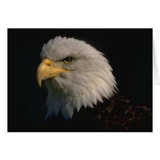 Amerikanischer Weißkopfseeadler Grußkarte