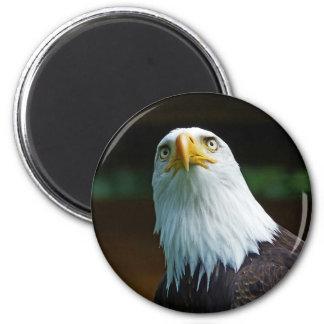 Amerikanischer Weißkopfseeadler-Kopf Runder Magnet 5,7 Cm