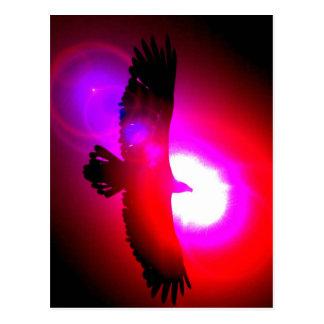 Amerikanischer Weißkopfseeadler Postkarten