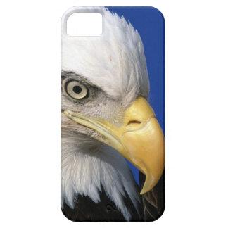 Amerikanischer Weißkopfseeadler-Vogel iPhone 5 Etui