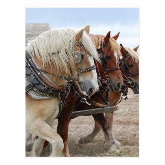 Amerikanisches Arbeits-Pferd Postkarte