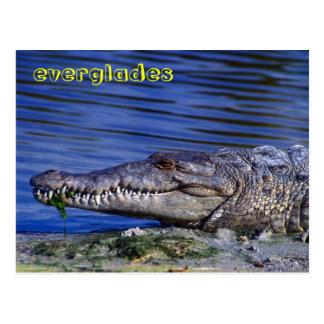 Amerikanisches Krokodil-Sumpfgebiete Postkarte