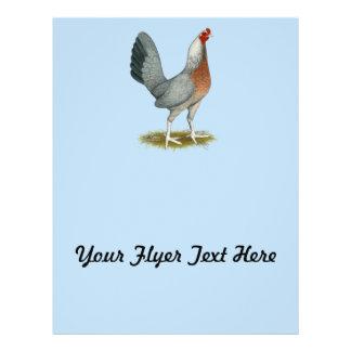 Amerikanisches Spiel-Henne-Silber-Blau Flyer