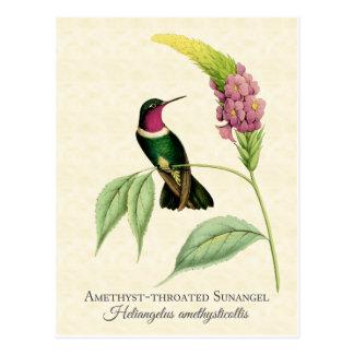 Amethyst Throated Kolibri-Kunst Postkarte