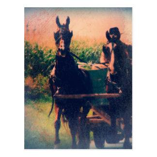 Amisches Pferdeteam Postkarte