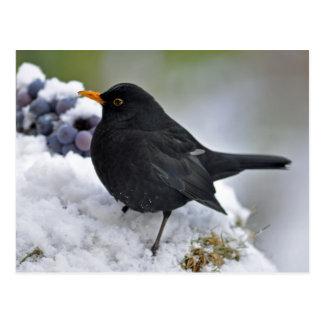 Amsel im Schnee Postkarte