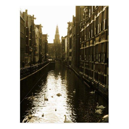 Amsterdam-Kanal-Schwan-Foto-Postkarte