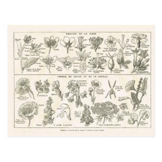 Anatomie der Blumen Postkarte