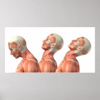 Anatomie der männlichen Hauptmuskeln in den Poster