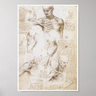 Anatomie der Schulter, Leonardo da Vinci Poster