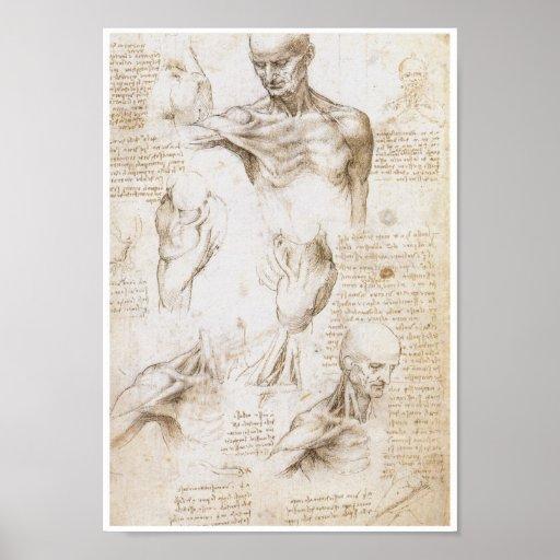 Anatomie der Schulter, Leonardo da Vinci Plakatdruck