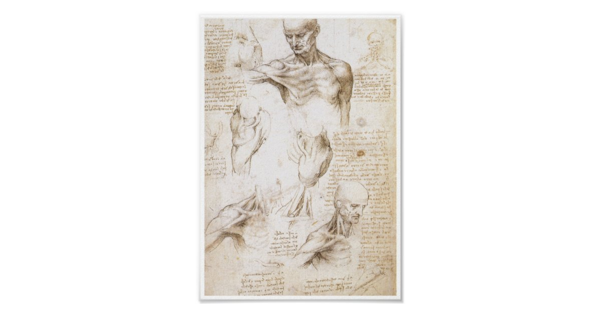 Anatomie der Schulter, Leonardo da Vinci Poster | Zazzle