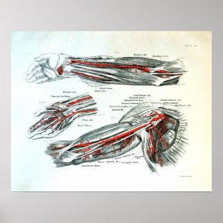 Anatomie des Armes Poster