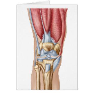 Anatomie des menschlichen Kniegelenks Grußkarte
